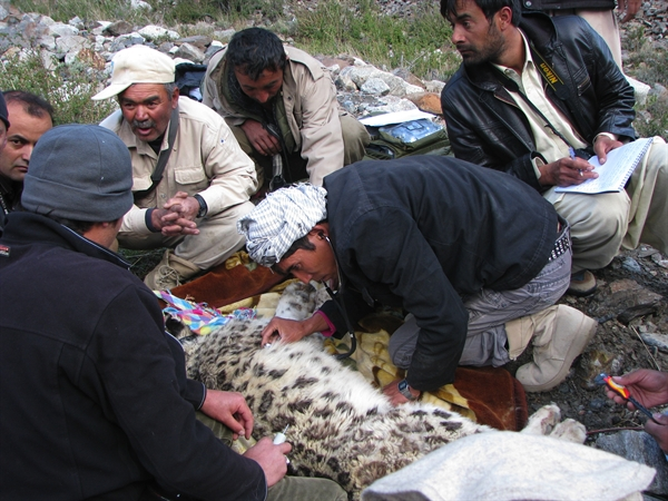 WCS Snow Leopard Project